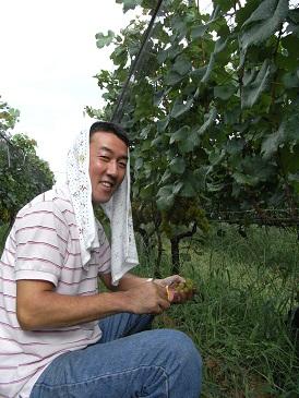 シャルドネ収穫2