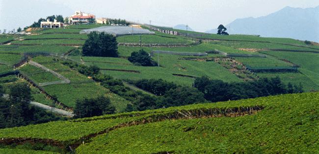 ぶどうとワインの産地・山梨県甲州市勝沼町