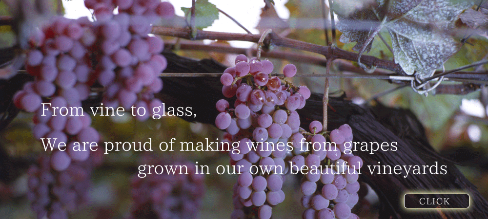 Our beautiful vineyards...From vine to glass, We are proud of making wines from grapes grown in our own beautiful vineyards.