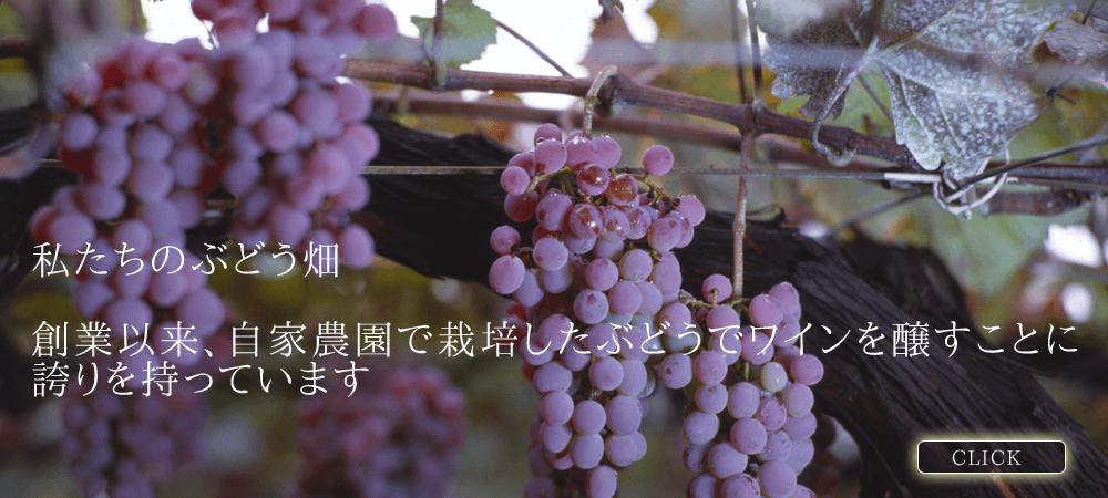 私たちのぶどう畑 創業以来、自家農園で栽培したぶどうでワインを醸すことに誇りを持っています