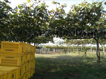 試PV収穫風景